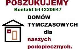 Domy tymczasowe